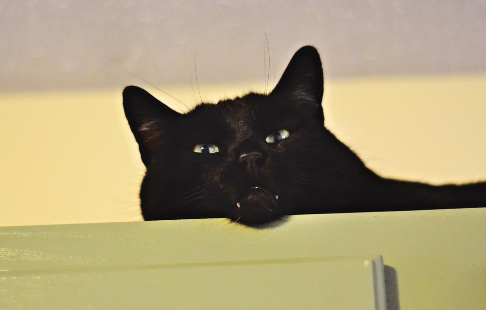 Salem on the cabinets