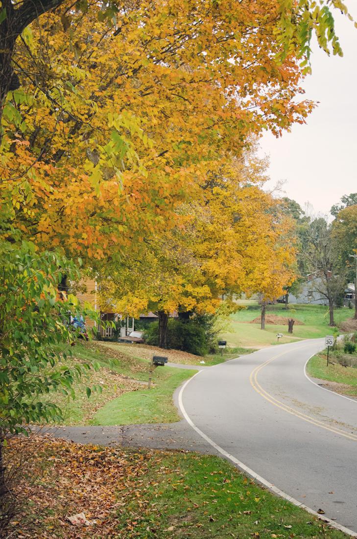 Neighborhood foliage