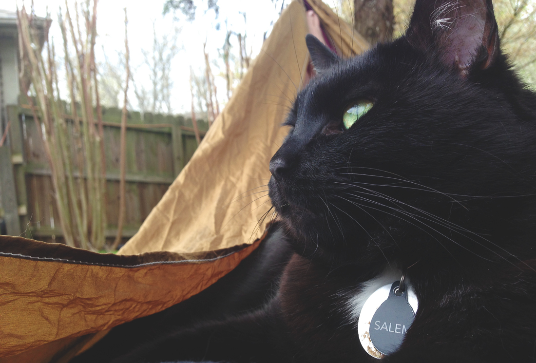Salem in the hammock