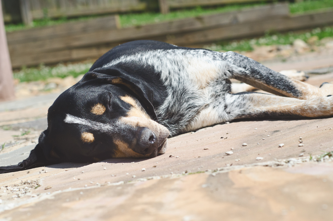 Napping in the sun