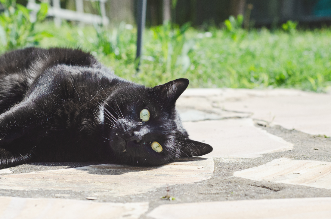 Salem May 2016